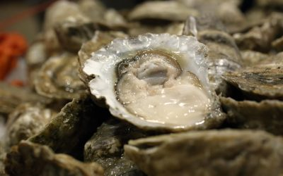 Our Signature Wicked Pissah Oyster – Harvested Exclusively for Ford's Fish Shack!